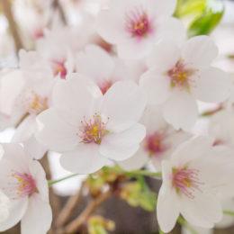 春を感じる日